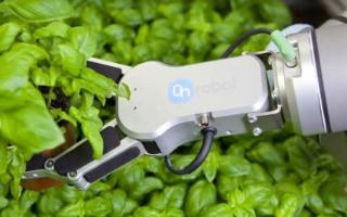 丹麦花卉公司用机器人对植物进行采摘及包装