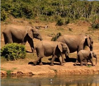 如何利用物联网技术帮助拯救濒危动物