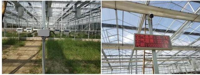 物联网温控系统在智能温室种植中起什么作用