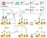 核酸是生物化学与分子生物学的研究重点及依据