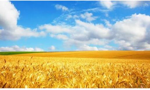区块链技术正在为现代化的工业农业及各行各业赋能