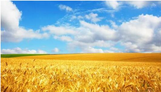 区块链如何赋能订单农业