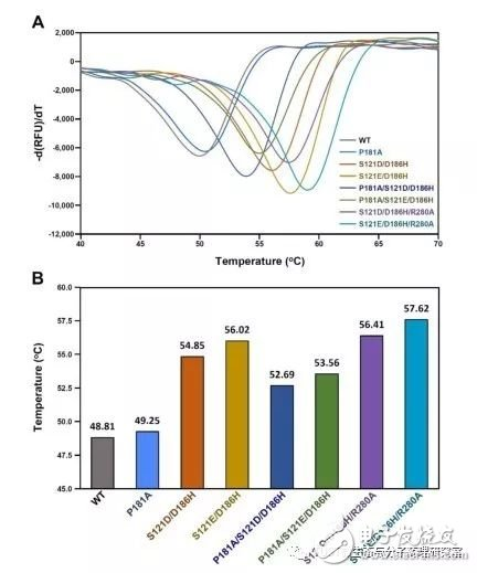 Ideonella sakaiensis菌PET降解能力提升