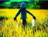 温湿度传感器应用在姐姐智慧稻草人中 智能稻草人