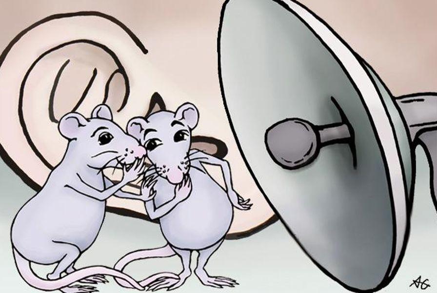 关于使用深度学习破译老鼠的语言分析和介绍