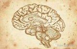 深度学习脑结构和脑工作原理最详细图解