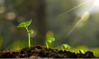 LED植物生长灯可以促进植物幼苗的快速和健康生长