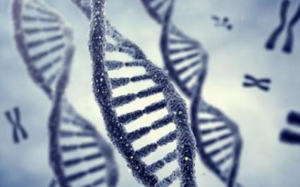 未来会用DNA来做为存储硬盘吗