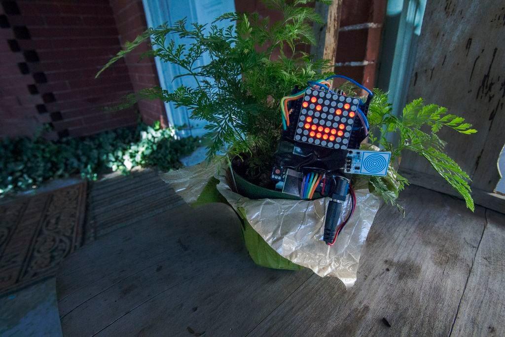 如何实现植物生长可视化