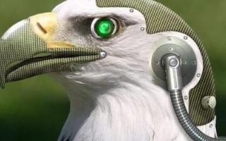 一款可以精准模仿鸟类的机器人