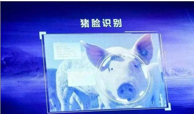 AI养猪你听说过吗