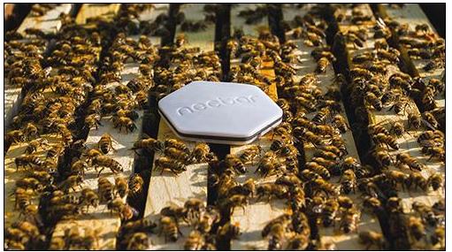 养蜂人怎样利用RFID技术来管理数据