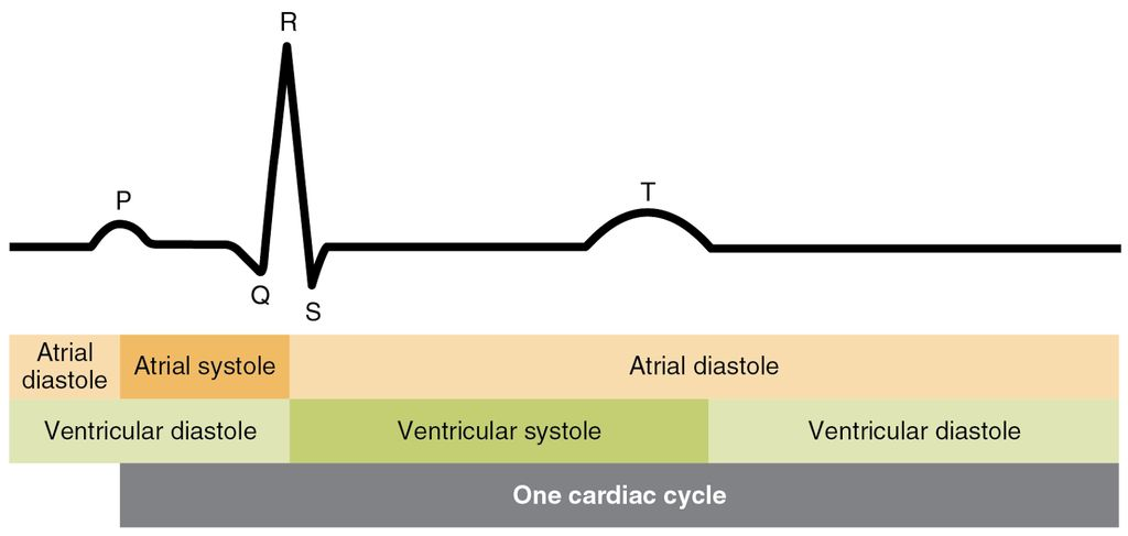 怎样构建显示人的心电图的设备