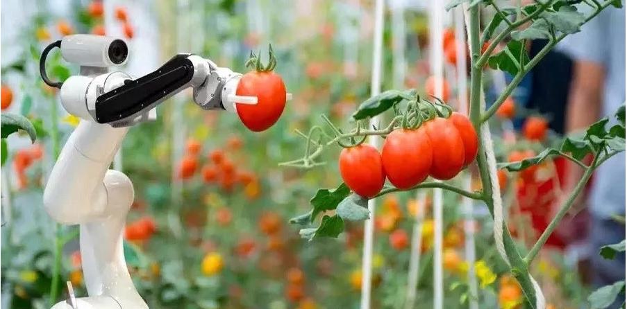 智慧农业的基础和核心分别是什么