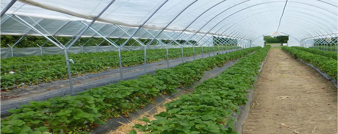 节水灌溉如何利用好物联网技术