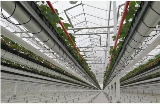 中国和外国的农业物联网有什么差异