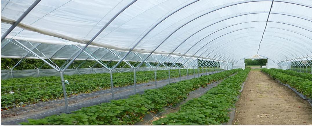 物联网在农业领域都有一些什么应用