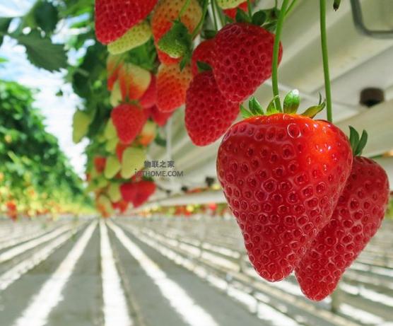 智能温室与物联网技术结合将可以解决农业生产效率低...