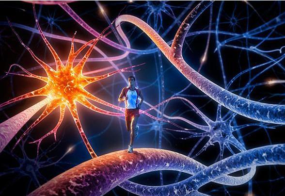 虚拟现实技术将带你走进神经元构建的大脑