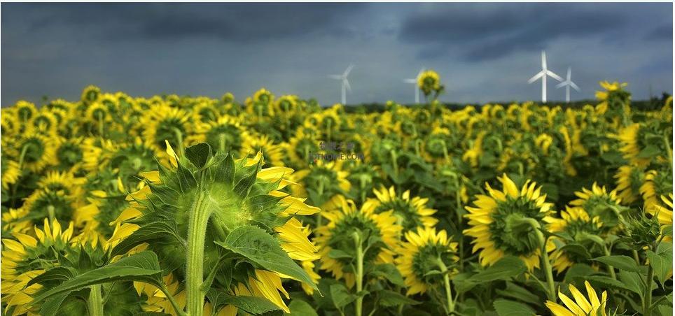 智慧农业将会如何改善农业