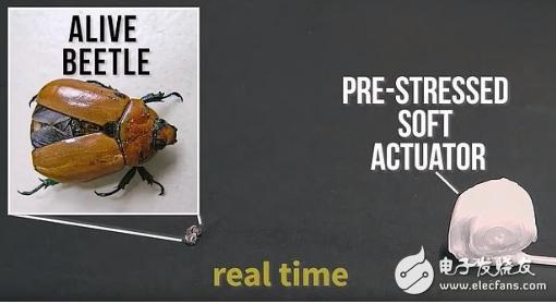 软体机器人具有显著优势 能在120毫秒内捕捉到昆虫