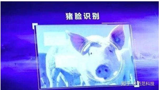 人工智能养猪可以为养猪的人造福吗