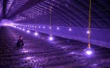 植物生长灯的市场在2018年已经达到32.3亿美元