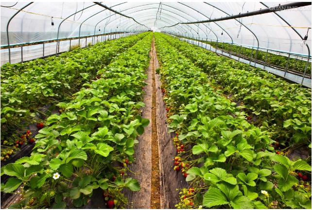 智慧农业怎样利用好人工智能来加快落地