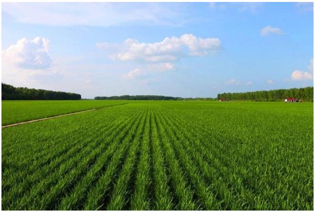 农业物联网怎样来保证食品的安全