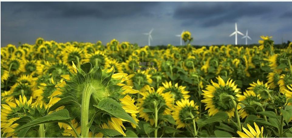 农业加上物联网技术会变得怎样