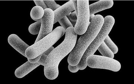 未來結核病的治療將利用計算機電子技術來解決