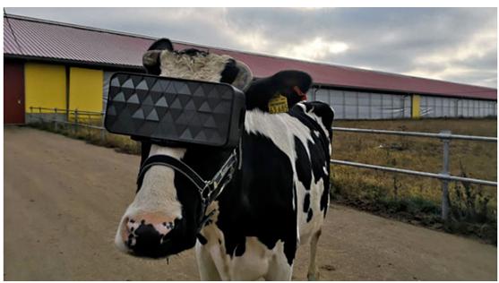 vr技术在奶牛养殖中有什么应用