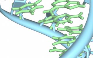 研究人員使用AI技術深入研究預測RNA結構的方法