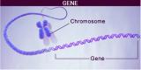 浅析遗传算法的工作原理