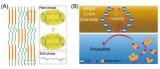 苏州大学研究人员研发出一种单锂离子通道聚合物粘结剂 将解决锂硫电池能量严重衰减的问题