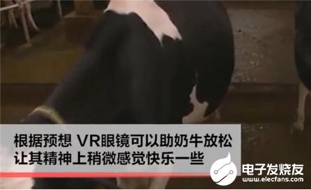 VR技术新应用,给奶牛戴上VR眼镜