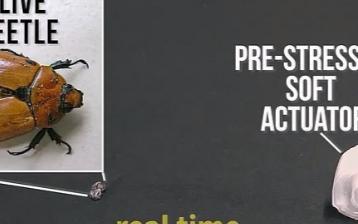 软体机器人仿变色龙舌头,能轻松捕捉到昆虫