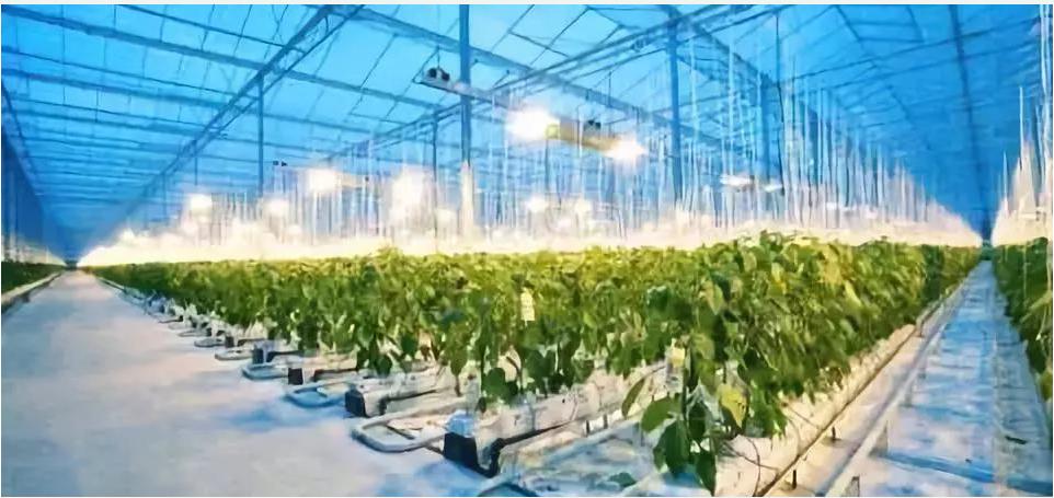人工智能与农业领域怎样深度的融合