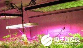 LED如何在植物领域大展拳脚