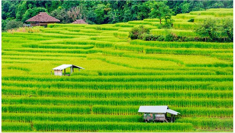 物联网等技术如何用来测量农业