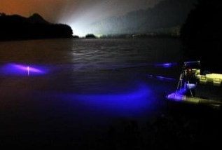 怎么認識夜釣燈