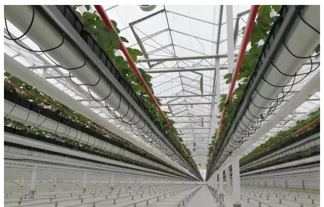 农民承担得起农业物联网造价吗