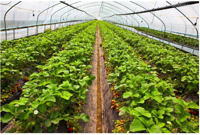 人工智能是如何引领智慧农业的