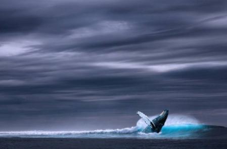 2020年将可能是巨鲸比特币最后一个神传说的年度