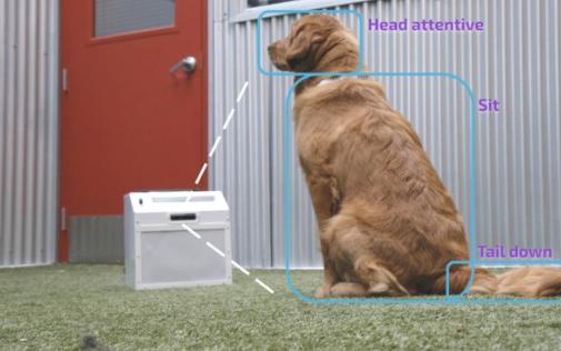 人工智能训狗设备,或与人类训练师效果一样