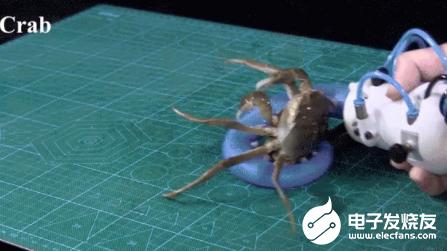 觸手機器人能輕松抓住活螃蟹 在操縱物體方面具有優勢