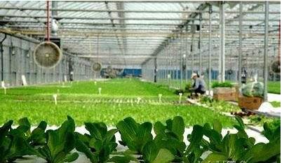 农业物联网技术在花卉栽培中的应用