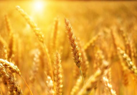 基于區塊鏈技術的農業平臺GrainChain介紹