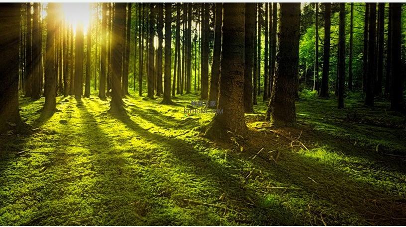 物联网在林业上有什么作用