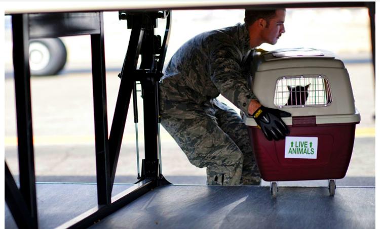 物联网如何确保宠物在航空运输中
